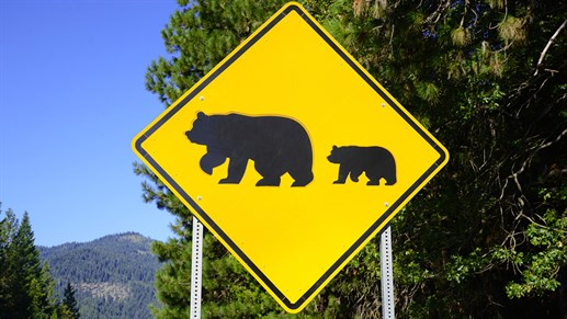 Bear Sign in Yosemite National Park